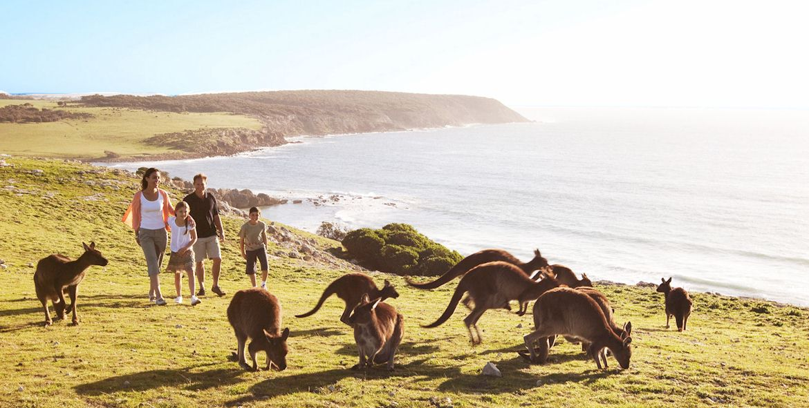 07-australia-vacation-tour-kangaroos-beach