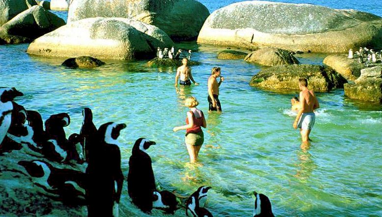 africa-penguins