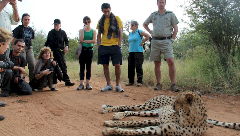 african-bush-walk-cheetah